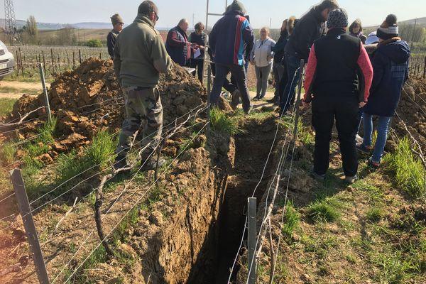 Des fosses ont été creusées au milieu des parcelles de vigne pour prélever des fragments de terre.
