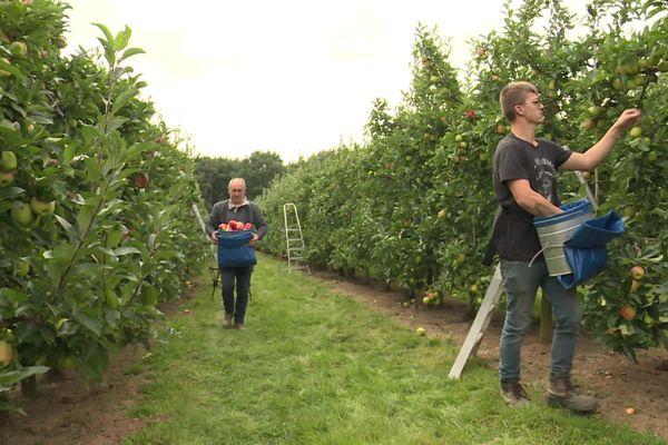 Treize variétés de pommes seront disponibles d'ici à mi-novembre