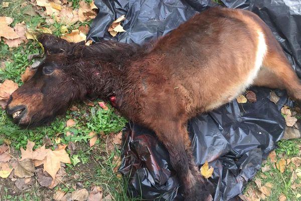 Un poney a été sauvagement massacré dans un camping d'Argelès-sur-mer - 25 novembre 2019