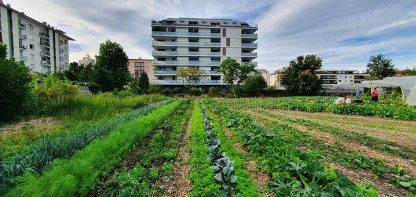 La ferme se situe au beau milieu des 'immeubles