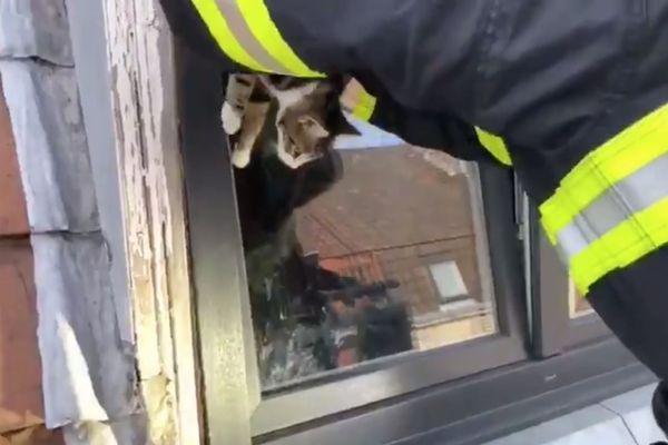 Sans les pompiers, l'animal risquait l'asphyxie