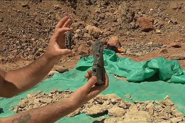 2 fragments de mâchoires de dinosaures rabhdodon jeune et adulte découverts à Villeveyrac (Hérault)