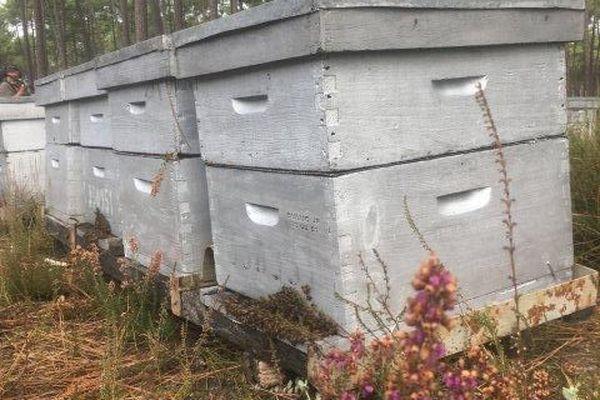 Le glyphosate est utilisé pour détruire la bruyère que butinent les abeilles.