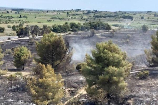 Au moins quinze hectares de garrigue et de pinède ont brûlé ce dimanche 30 mai à Lespignan, dans l'Hérault.