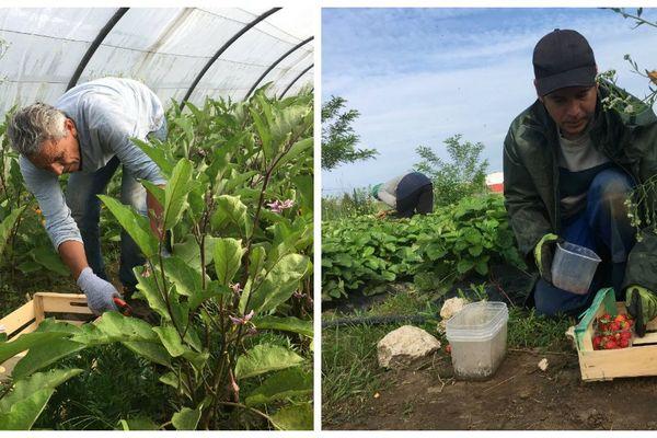 Les Jardins du coeur de Blois emploient 18 personnes en CDD d'insertion : Ahmad et Ludovic