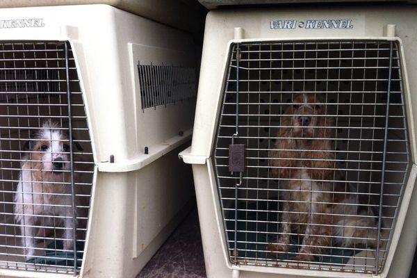 Les 150 chiens ont été évacués ce vendredi matin vers des chenils en région parisienne.