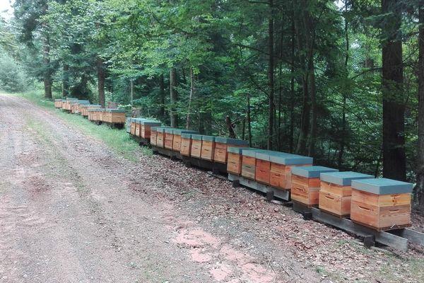 Des ruches toujours placées loin des champs traités aux pesticides