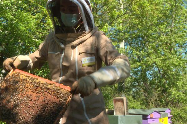 A cause du coup de gelée sur les fleurs, Mathieu Domecq, apiculteur à Lavaur tire un trait sur sa récolte de miel de printemps.