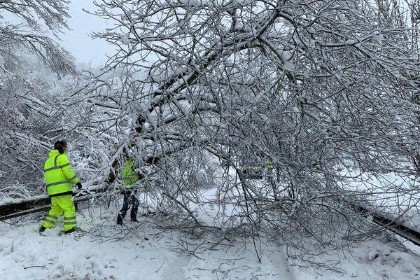 Les techniciens dégagent l'arbre de la route