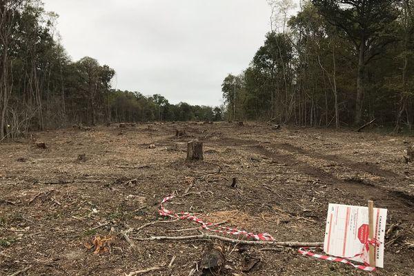 La trouée dans le bois de Latingy à Mardié. Au total 4,2 hectares de bois sont coupés, sur quarante mètres de large.