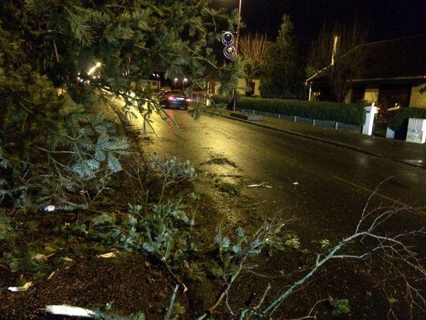 Tempête : à Evrecy (Calvados) arbre couché sur trottoir