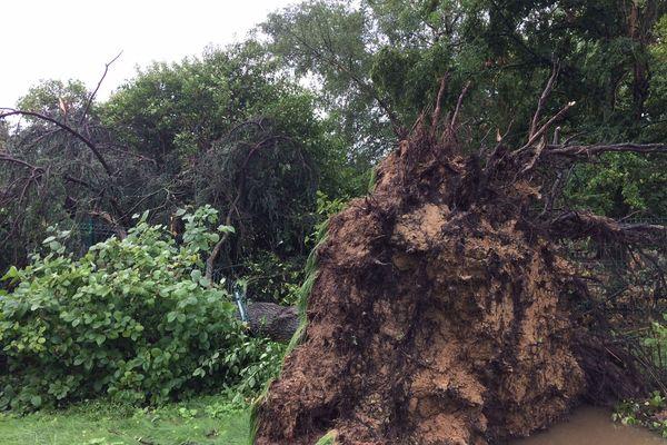 A l'entrée du Parc des oiseaux de Villars-les-Dombes (Ain), après la tempête.