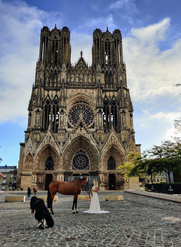 Au petit matin, un cheval devant la cathédrale de Reims.