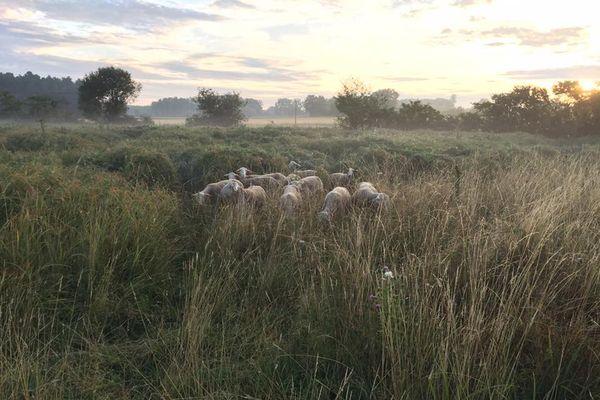 Dans les prairies humides de la ferme des Bergers de la Veude