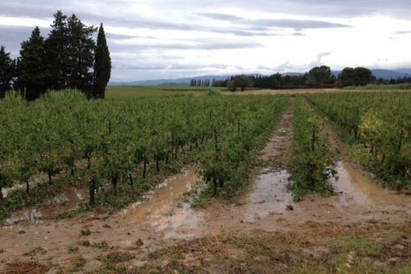 Vignes inondées à Puichéric Aude