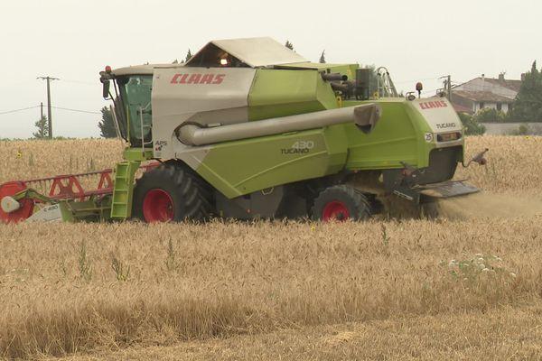 Dans l'exploitation de blé dur de Sébastien et Didier Gazel, les moissonneuses livrent une course contre la montre pour terminer la récolte avant l'arrivée de la pluie - Castelnaudary (Aude) - 12 juillet 2021.