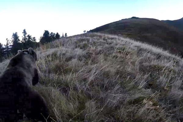 Capture d'écran d'une video réalisée par l' Office national de la chasse et de la faune sauvage (ONCFS) montrant la réintroduction d'une ourse femelle en Béarn, le 5 octobre 2018.