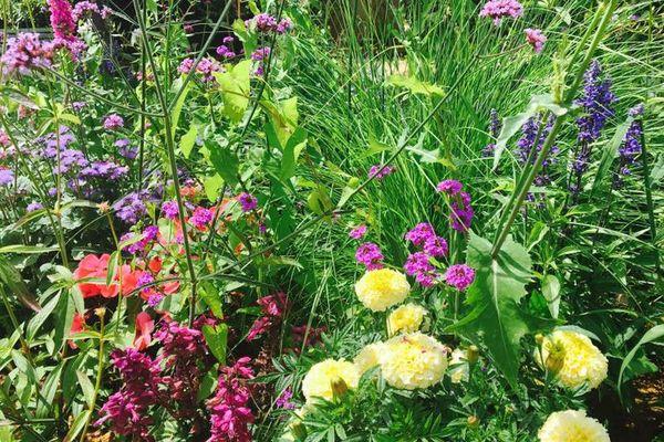 Zéro pesticides dans nos jardins : les fleurs cultivées dans les potagers favorisent l'arrivée d'insectes utiles pour éliminer des pucerons par exemple.