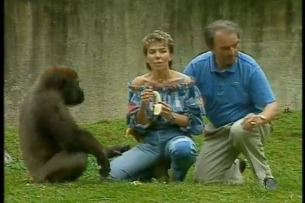 Isabelle se fait bousculer par deux gorilles dans l'émission 40° à l'ombre (France 3)