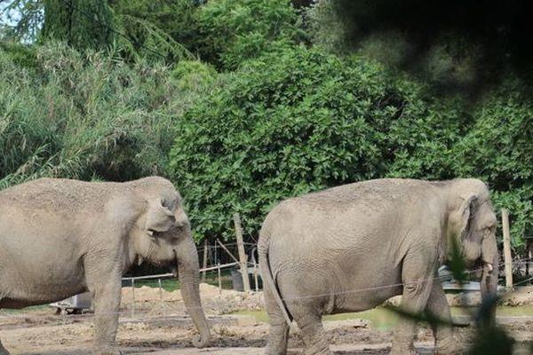 Mina et Kamala ont plus de 40 ans. Elles sont confinées sur un terrain à Aimargues (Gard)