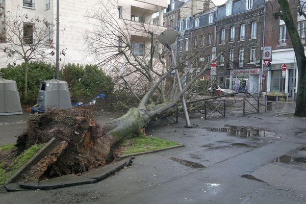 Arbre tombé dans le quartier St Sever à Rouen