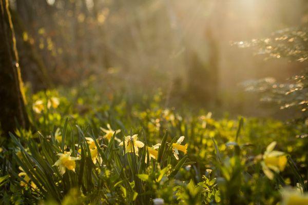 Le mois de mars débute sous les meilleurs auspices.