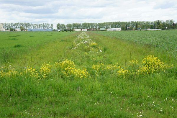Les cultures sont séparés par des bandes d'herbes et des bandes fleuries.