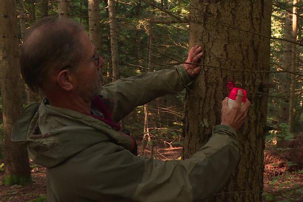 Le marquage des troncs pour indiquer aux bucherons quels arbres doivent être coupés  - 10/10/21