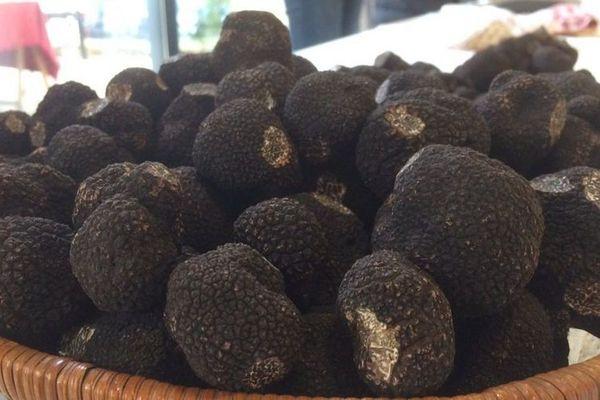 Les truffes du Périgord sur le marché de la Truffe de Ste Alvère, premier marché contrôlé de Dordogne de la saison, peuvent atteindre jusqu'à 1 200 €uros le kilo, en raison de leur qualité exceptionnelle..