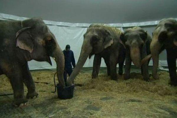 Les éléphants du cirque Arlette Gruss