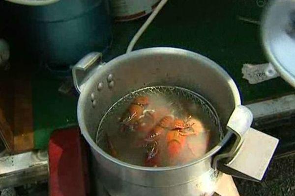 Les écrevisses américaines se dégustent cuites 2 minutes au court-bouillon ou grillées au barbecue.