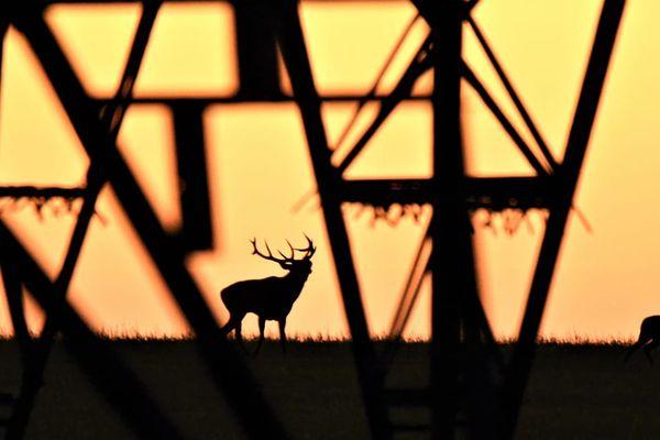 Pierre-Charles Dugarreau photographie régulièrement des cerfs au Parc National des Forêts, depuis qu'il a commencé la photo en 2017.