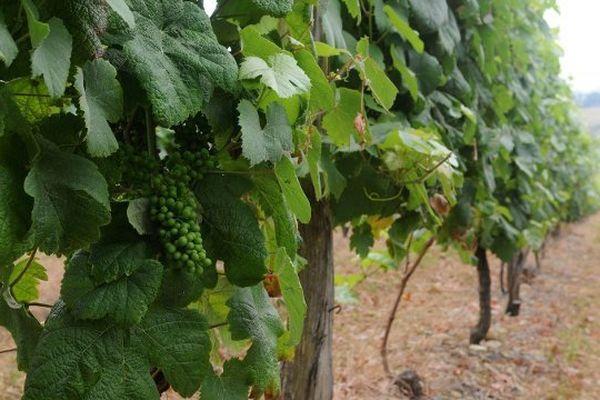 Le Gers terre de vignes