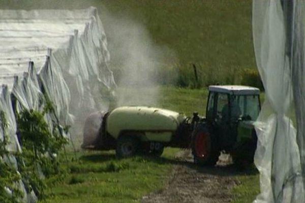 Pesticides et pommiers ( illustration)