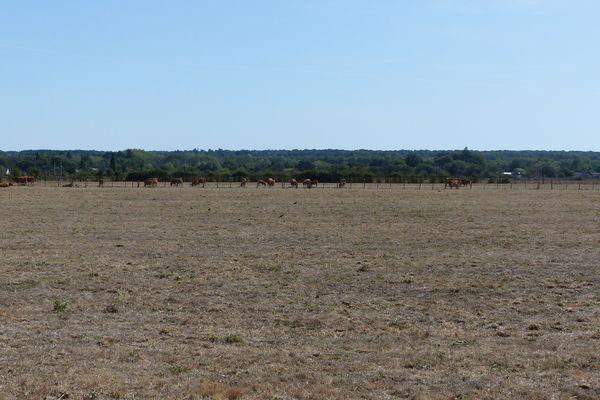 prairie séche