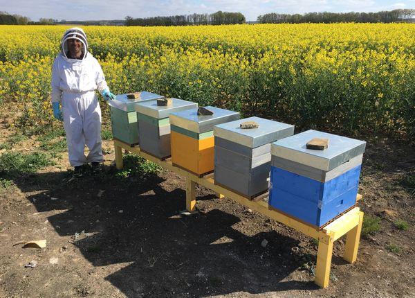 Quand la technologie peut donner un petit coup de pouce à la nature. Les ruches connectées jouent la transparence désormais.