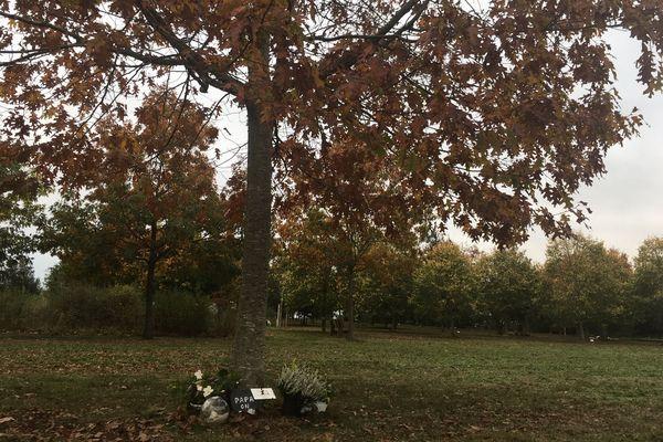 Au pied de ce chêne, la famille a choisi d'enterrer l'urne funéraire de leur défunt