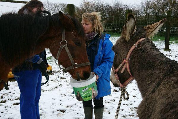 Une cinquantaine d'animaux sauvés en Mayenne par la fondation Brigitte Bardot