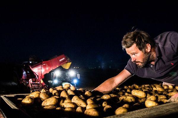 Les Leluc produisent jusqu'à 2500 tonnes de pommes de terre par an.