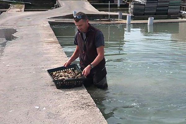 Les huîtres de Vendée souffrent du manque de pluie