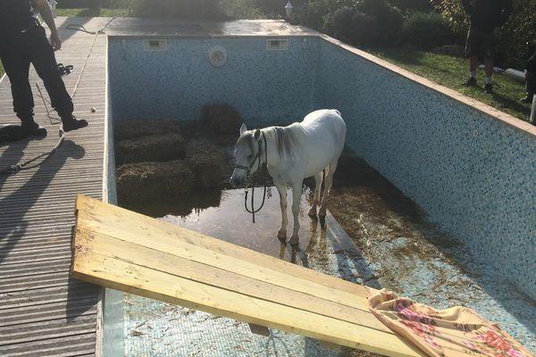 le cheval au fond de la piscine