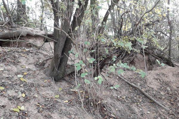 Les terriers de blaireaux ont toujours plusieurs entrées