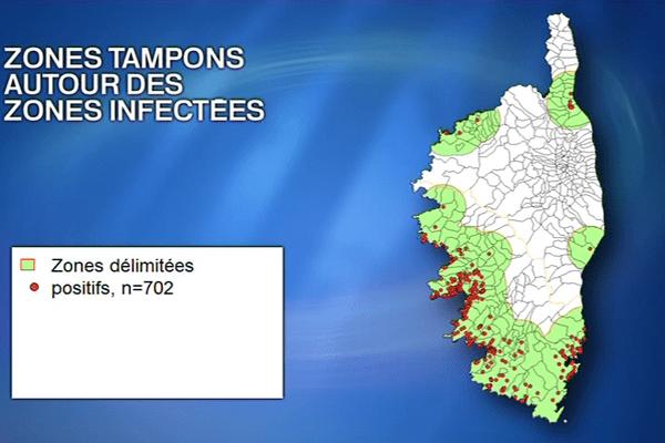 95% des 275 foyers de Xylella fastidiosa recensés sur l'île se trouvent en Corse du Sud.