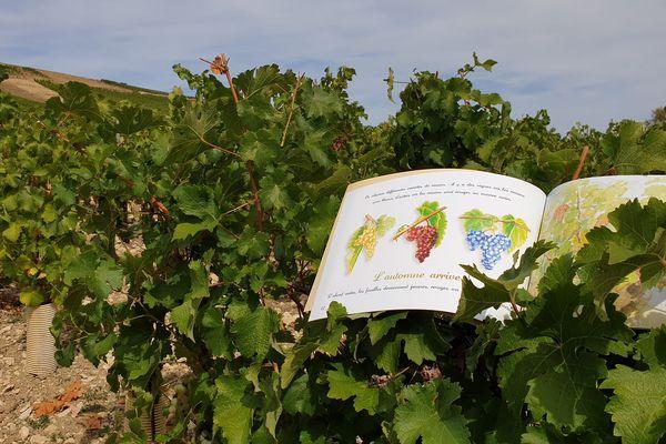 Un livre sur le vin que pour les enfants