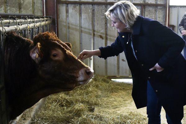 Marine Le Pen, candidate du Front National aux élections présidentielles, en visite dans une exploitation de vaches limousines dans le Lot.