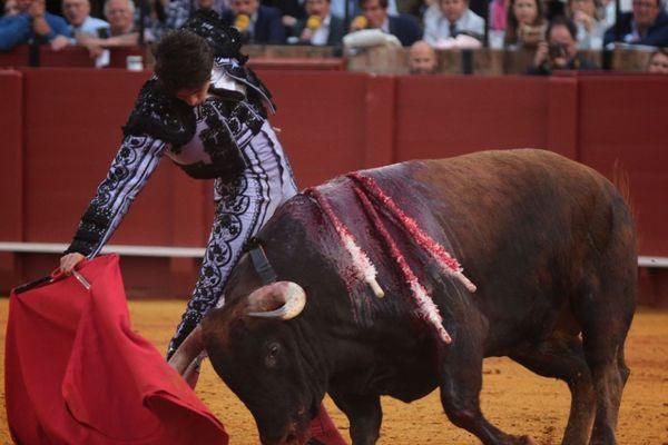 Un grand toro, Derramado. Et un grand Castella. Séville 5 mai 2017