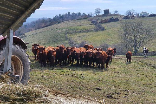 Les épisodes de temps chaud et sec sont de plus en plus fréquents en Auvergne.