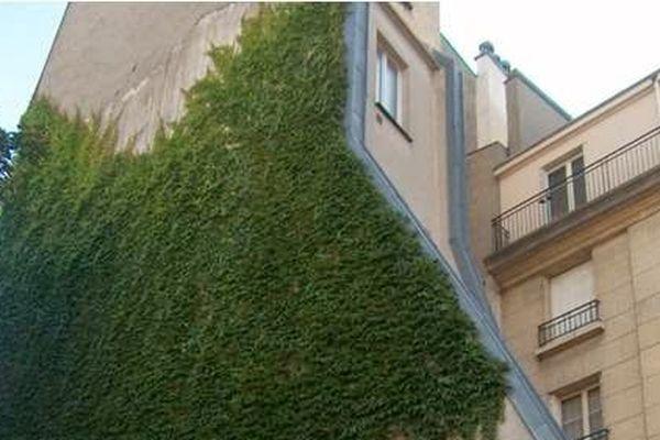 Mur végétalisé (plante grimpante à crampons même le mur), rue du Fauconnier Paris  4e