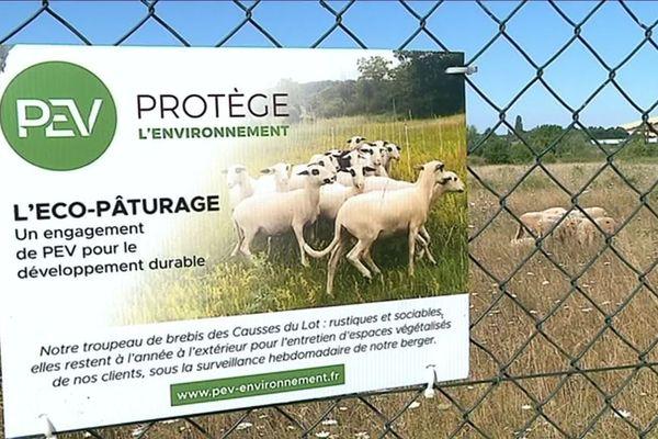 La société PEV,spécialisée dans l'entretien d'espaces verts, propose à ses clients d'opter pour l'éco-pâturage.