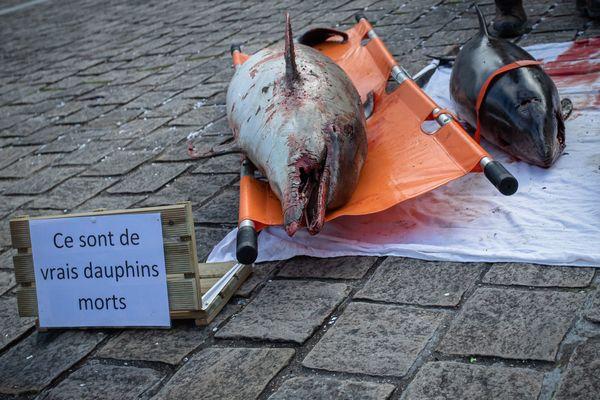 Des militants de l'ONG Sea Sheperd déposent 4 cadavres de dauphins tués par des filets de pêche, devant l'Assemblee nationale.